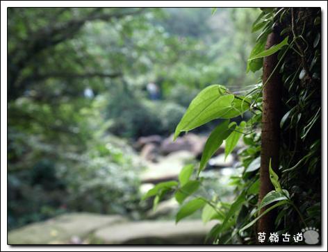 2008草嶺古道-20.jpg