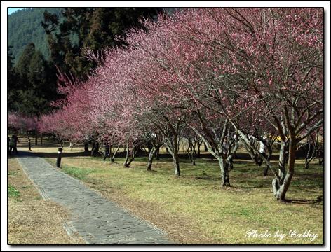 武陵農場-2.jpg