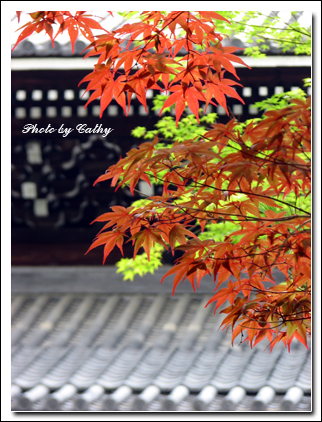 南禪寺-5.jpg