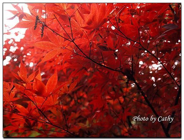 2009武陵賞楓-9.jpg
