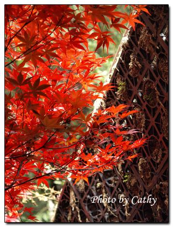 2009武陵賞楓-18.jpg