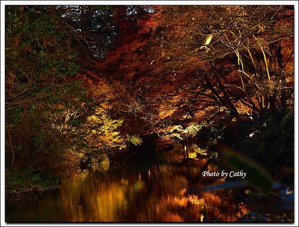 六義園夜楓-1.jpg