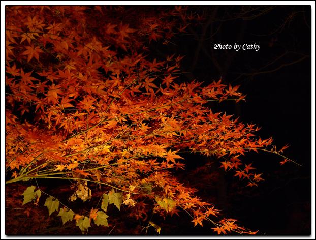 六義園夜楓-2.jpg