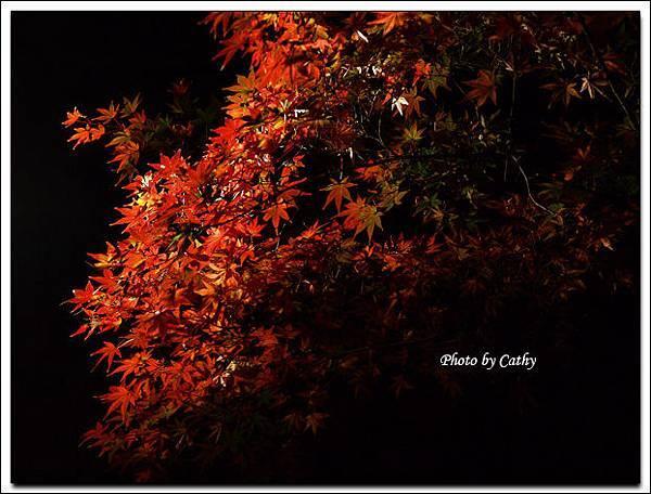 六義園夜楓-3.jpg