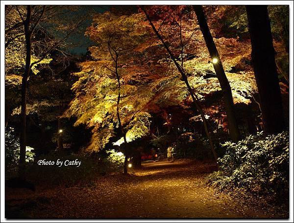 六義園夜楓-4.jpg