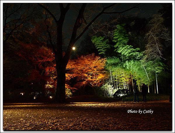 六義園夜楓-5.jpg