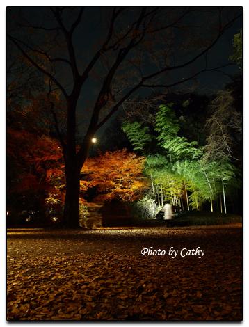 六義園夜楓-6.jpg