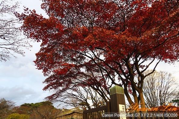 北海道1126.jpg