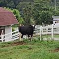 也有愛心的大牛~