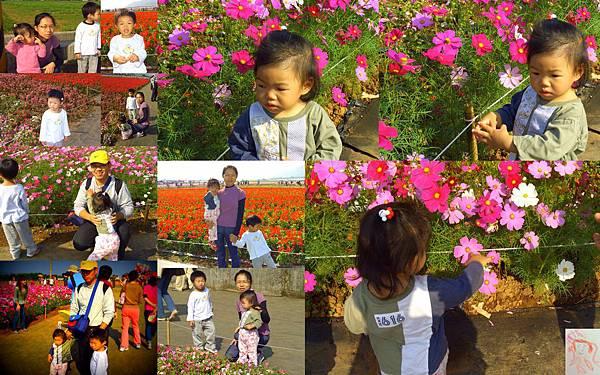 20071117新社花海