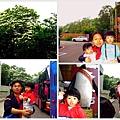 20070426三義油桐花之旅