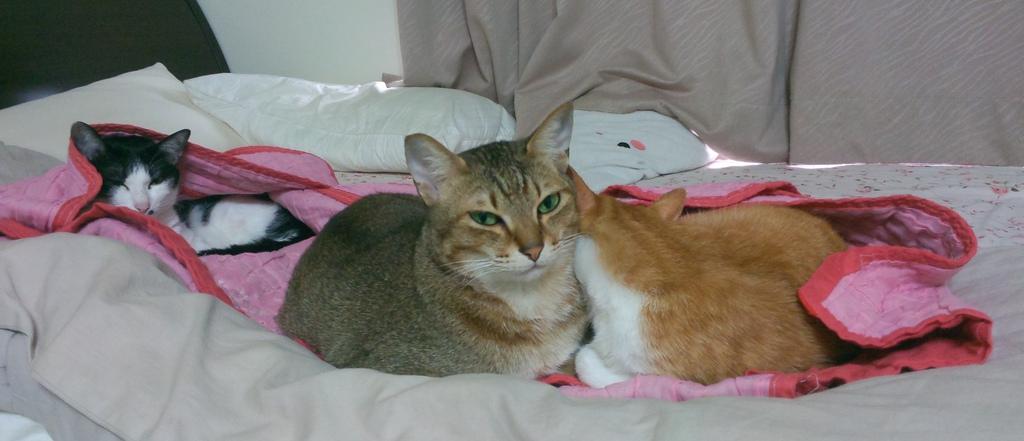 3隻貓相片