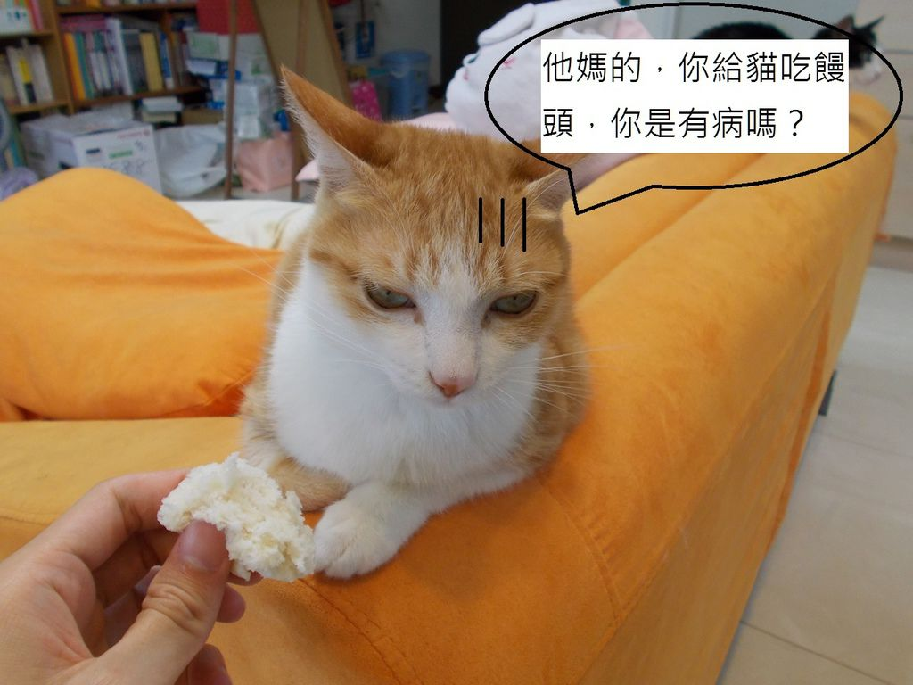 17小黃吃饅頭不爽