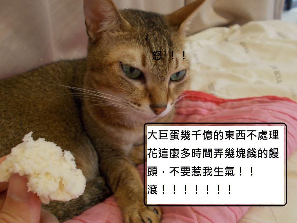 18小貓生氣了