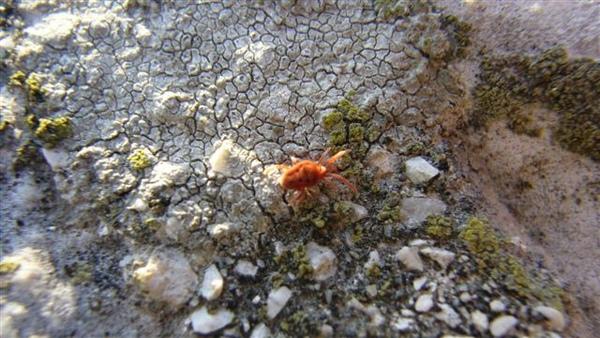 (108)小紅甲蟲?.JPG