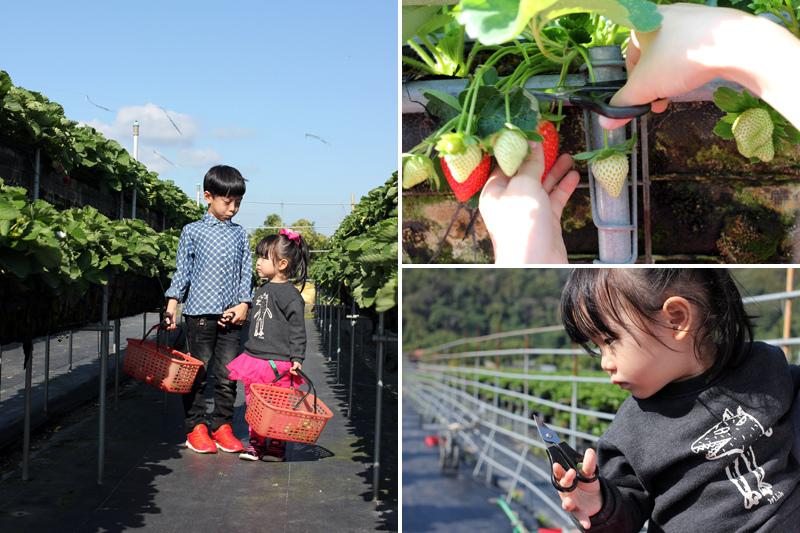 大湖草莓_07.jpg