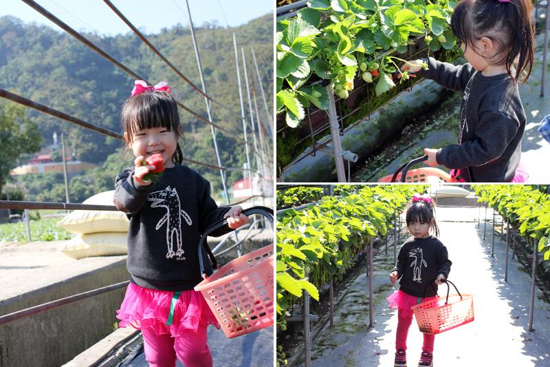 大湖草莓_09.jpg