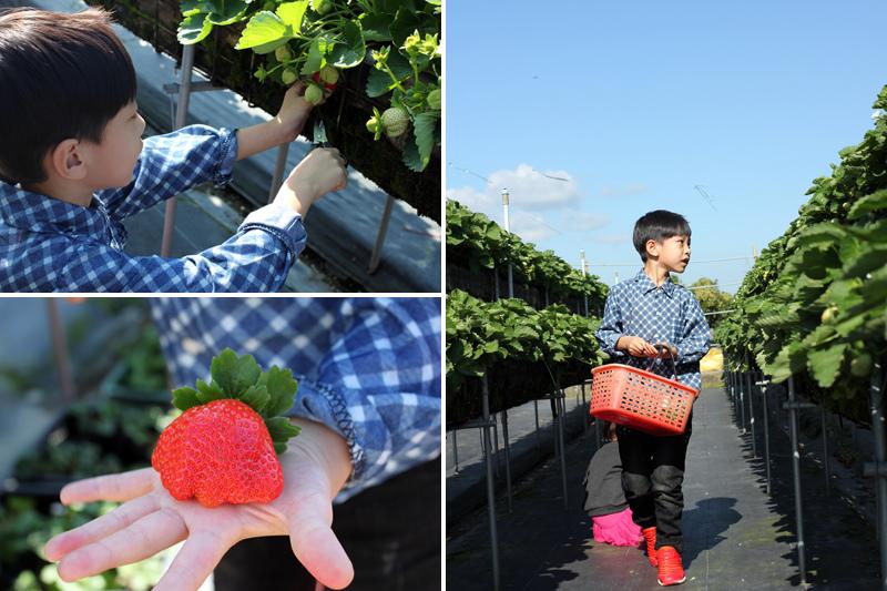大湖草莓_08.jpg