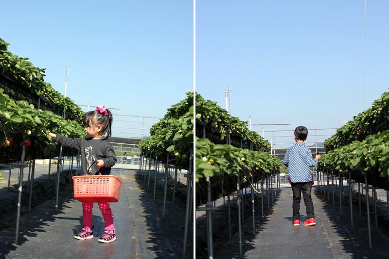 大湖草莓_11.jpg