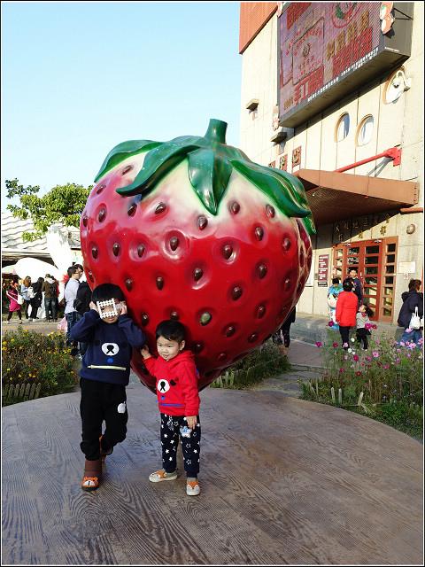 採草莓-奇奇草莓園 (08).jpg