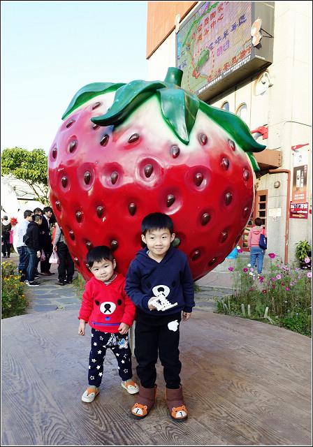 採草莓-奇奇草莓園 (11).jpg