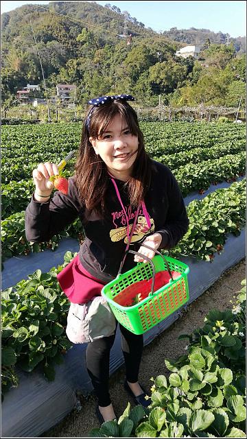 採草莓-奇奇草莓園 (41).jpg