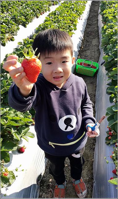 採草莓-奇奇草莓園 (47).jpg