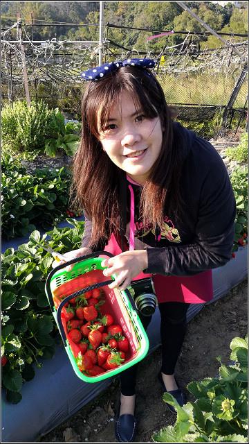 採草莓-奇奇草莓園 (49).jpg