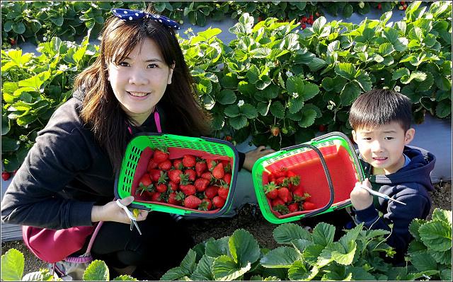 採草莓-奇奇草莓園 (52).jpg