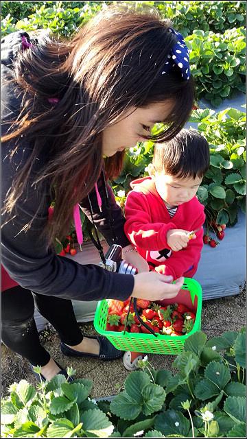 採草莓-奇奇草莓園 (57).jpg