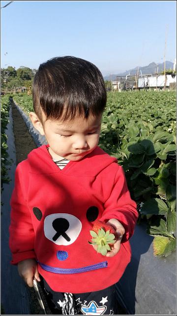 採草莓-奇奇草莓園 (63).jpg