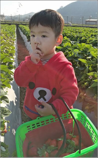 採草莓-奇奇草莓園 (71).jpg
