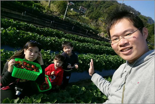 採草莓-奇奇草莓園 (75).jpg