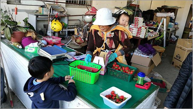 採草莓-奇奇草莓園 (84).jpg