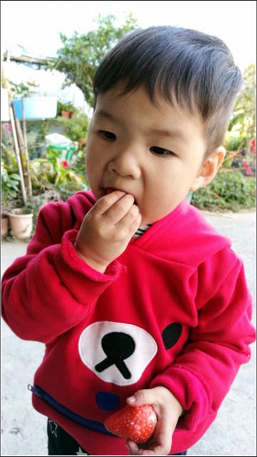 採草莓-奇奇草莓園 (85).jpg