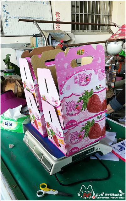 採草莓-奇奇草莓園 (87).jpg