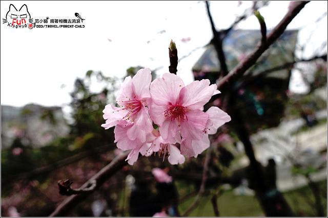 麗池賞櫻 - 008.jpg
