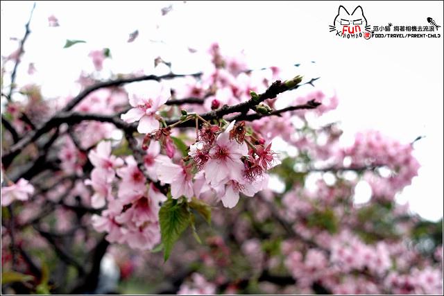 麗池賞櫻 - 026.jpg