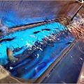 採蝦大盜 泰國流水蝦 - 072.jpg