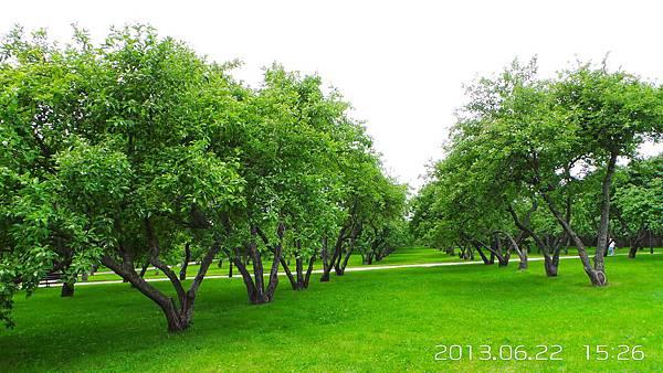 F-01-20130622_152604蘋果樹