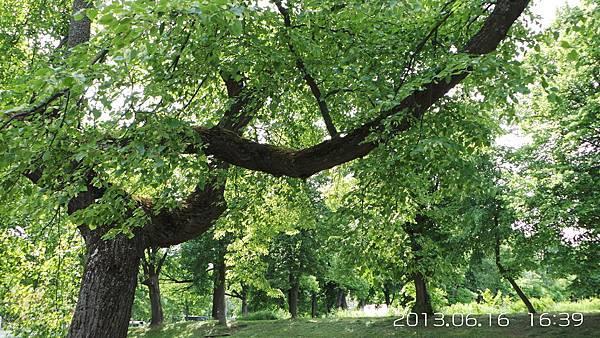 G-02-20130616_163925菩提樹