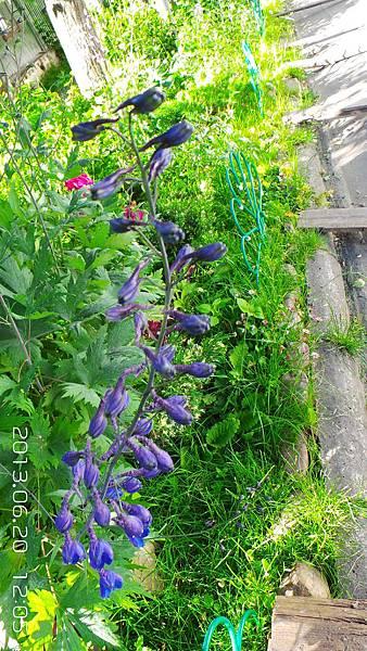 D-02-20130620_120529紫花