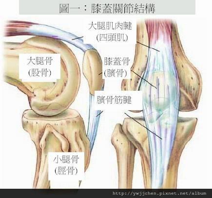 預防退化性膝關節炎-07