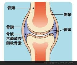 預防退化性膝關節炎-03