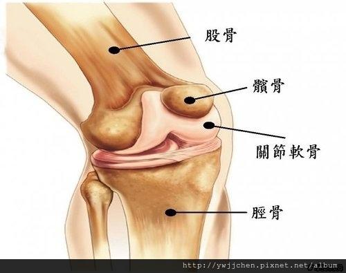 預防退化性膝關節炎-04