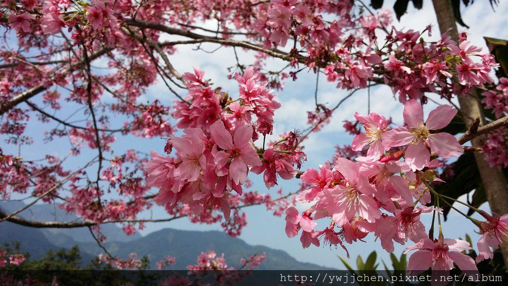 04-20150227_123024.jpg