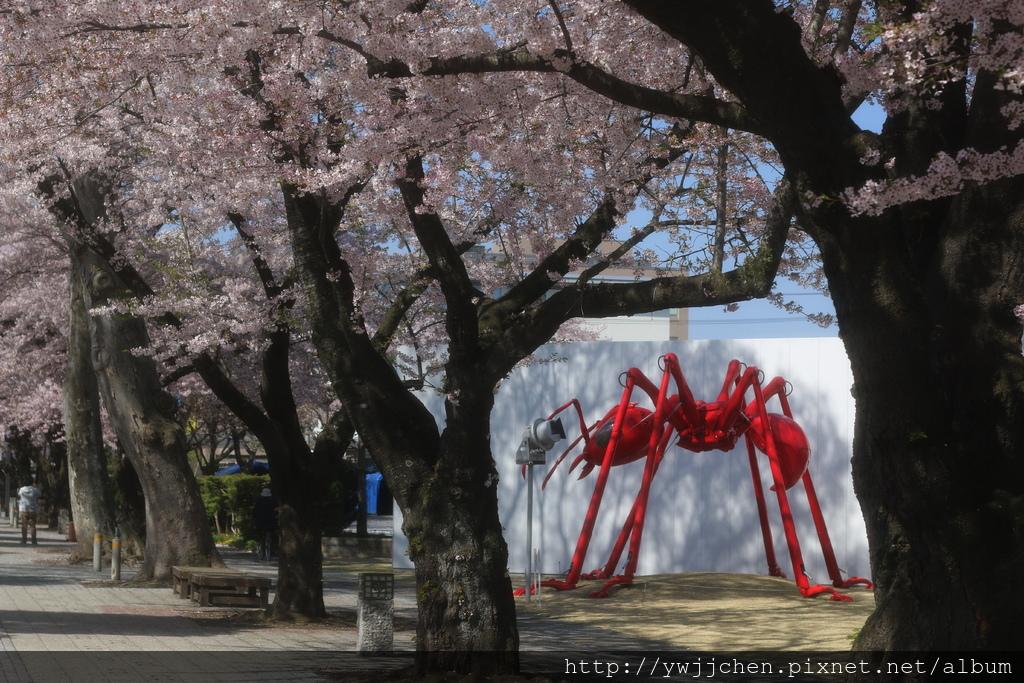 25-椿昇(紅火蟻)-04.JPG