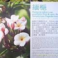 台北花博 (393).jpg