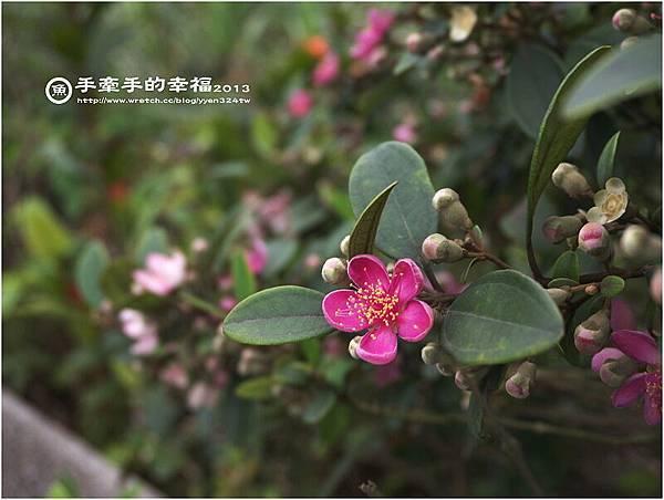 三芝桐花130502007.jpg