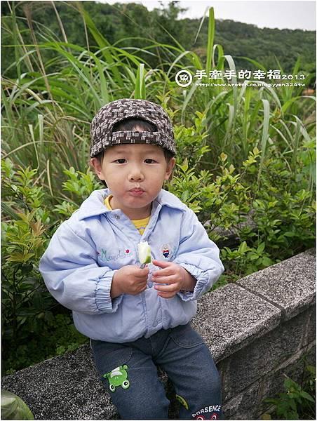 三芝桐花130502006